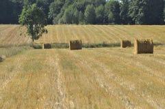 Stoppia del raccolto, la conclusione di estate Fotografia Stock Libera da Diritti