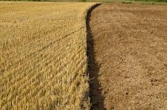Stoppia della paglia e suolo coltivato della terra sul campo dell'azienda agricola Immagine Stock