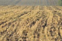 Stoppia dopo il raccolto limitato Agricoltura falciata Immagine Stock