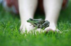 stopy żaby n Obrazy Royalty Free