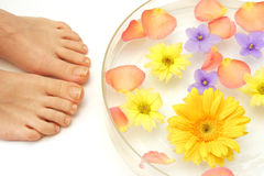 stopy kwiatów Obrazy Royalty Free
