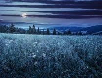 Stor äng med örter, träd i bergområde på natten royaltyfri bild