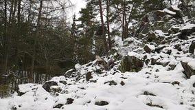 Stor avvikelse för grå uggla i ultrarapid på vintern lager videofilmer