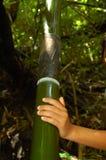 stor bambu royaltyfri foto