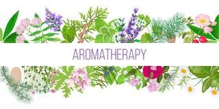 Stor baneruppsättning av populära nödvändiga oljeväxter Prydnad med textaromatherapy Royaltyfria Bilder