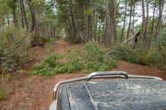 Stor bil 4x4 med trädstammen i spåret Arkivfoto