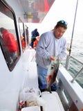 Stor blåfisk som fångas i December Arkivbild