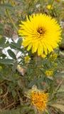 Stor blomma i trädgård Arkivbild