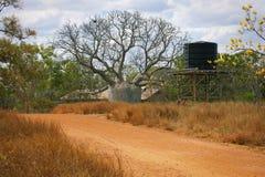 Stor Boab Tree Royaltyfria Foton