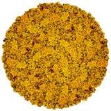 Stor boll från orange blommor Arkivfoto