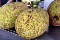 Stor brödfrukt på skärm royaltyfria bilder