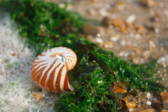 Stor brittisk sommar Pebble Beach med havsskalet Arkivbilder