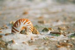 Stor brittisk sommar Pebble Beach med havsskalet Arkivfoto