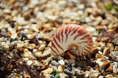 Stor brittisk sommar Pebble Beach med havsskalet Fotografering för Bildbyråer