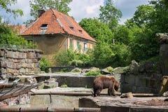 stor brown för björn Arkivfoton