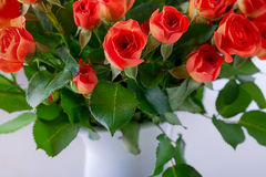 Stor bukett av röda rosor Arkivfoton