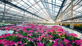 Stor drivhus med olikt växa för blommor i den stock video