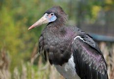 stor fågel Arkivfoto