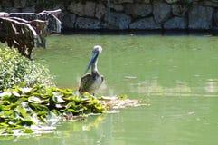 stor fågel Royaltyfri Fotografi