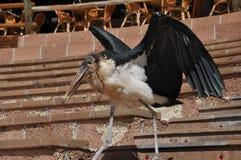stor fågel royaltyfri foto