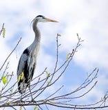 stor fågel Arkivbild