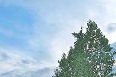 Stor fågel i ett lövrikt träd royaltyfri foto