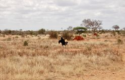 Stor fågel på safari Royaltyfria Bilder