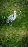 Stor fågelsommar Arkivfoton