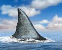 Stor fena för vit haj, hav, hav royaltyfria foton