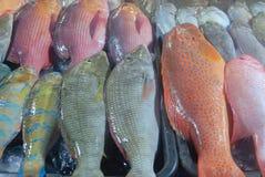 Stor fest av rå skaldjur Royaltyfri Fotografi