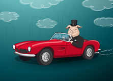 Stor fet rik gödsvin som kör en röd cabrio Royaltyfria Bilder