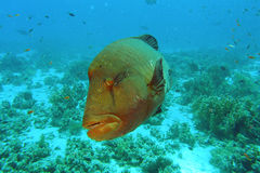 stor fisk Arkivfoton