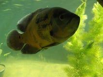 stor fisk Royaltyfri Foto