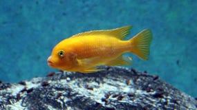 Stor fisk i akvarium alt-varelse på för havet, hav Royaltyfria Foton