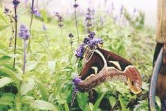 stor fjäril och blomma Royaltyfria Bilder