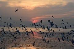 Stor flock av att flyga för havsfåglar Fågeln av frihet och den härliga abstrakta färgsolnedgången Naturfärg royaltyfri fotografi