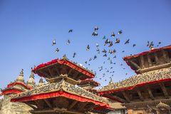 stor flock av gråa duvor på taken av pagoderna av röda asiatiska tempel och att flyga i den blåa klara himlen arkivfoton