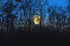 Stor fullmåne i den härliga skogen i höstsäsong royaltyfri bild