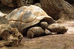 Stor gammal sköldpadda I Safari Ramat Gan Israel royaltyfri fotografi