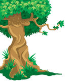 stor gammal tree stock illustrationer
