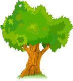 Stor gammal tree för din design royaltyfri illustrationer