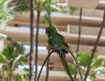 stor grön macaw Arkivbilder