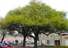 stor grön tree Arkivbild