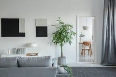 Stor grön växt i konkret kruka i ljus vardagsrum som är inre med grått möblemang arkivbilder