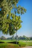 Stor grön träd och lyktstolpe i parkera Arkivbilder