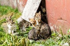 Stor grupp av hemlösa kattungar i en stadsgata nära huset arkivbild