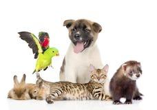 Stor grupp av husdjur bakgrund isolerad white Arkivfoto