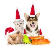 Stor grupp av husdjur i röda julhattar Isolerat på vit Royaltyfri Foto