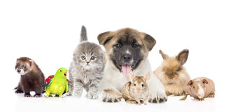 stor grupp av husdjur tillsammans framme Isolerat på vit Arkivbilder