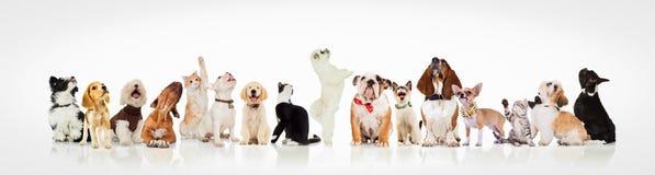 Stor grupp av nyfiken hundkapplöpning och katter som ser upp Fotografering för Bildbyråer
